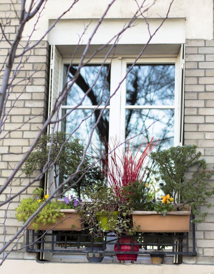 Fenster von der Außenseite mit Winterblumen Baumreflexion lizenzfreie stockbilder