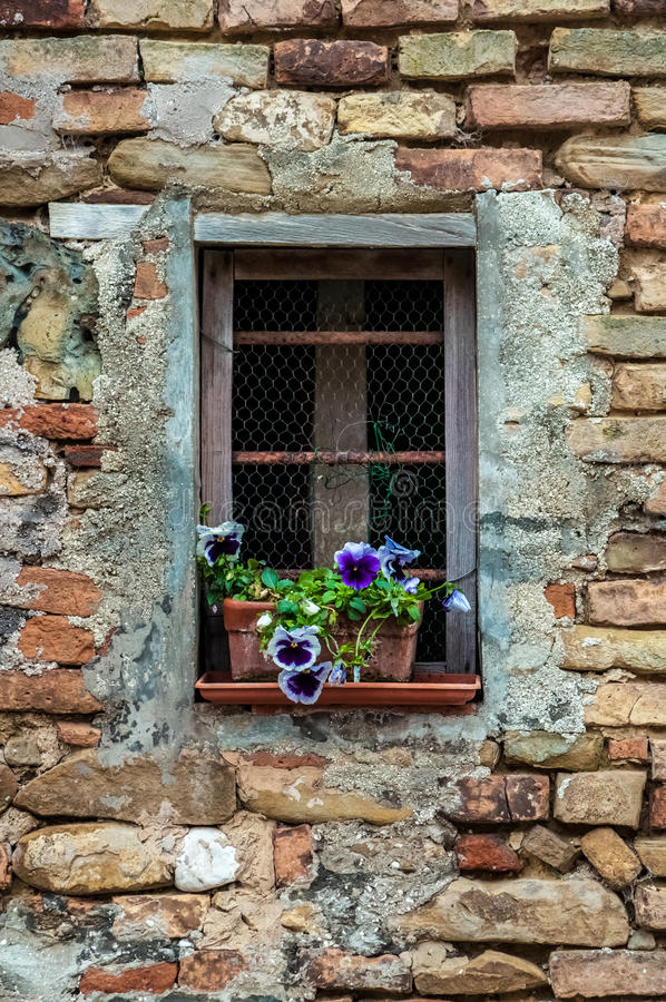 Fensterbrettblumen lizenzfreie stockfotos