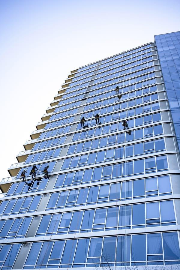 Fensterputzer waschen Fenster von hohen Geb?uden als die Bergsteiger, die abgestiegen werden und auf ?rtlich festgelegten Seilen  stockfotografie