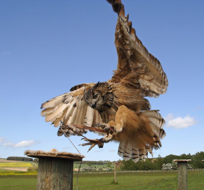 Fenton Bird of Prey Centre. Wooler Northumberland England Uk and its birds royalty free stock photos