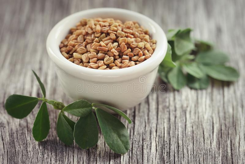 Fenugreek seeds with green leaves stock image