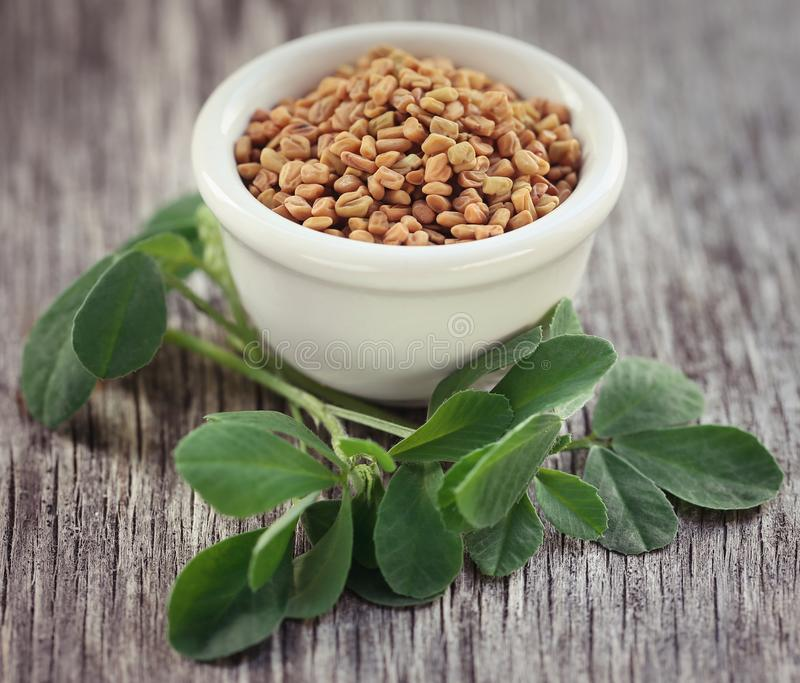 Fenugreek seeds with green leaves stock photo