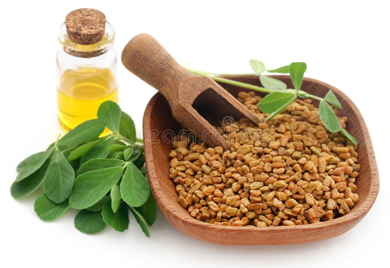 Fenugreek seeds with oil in bottle stock image