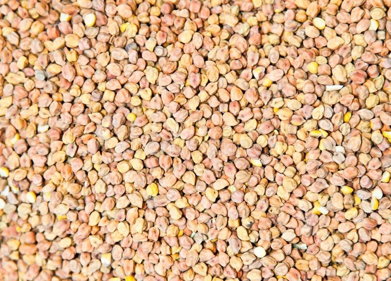 Fenugreek seeds spice background, closeup. royalty free stock image