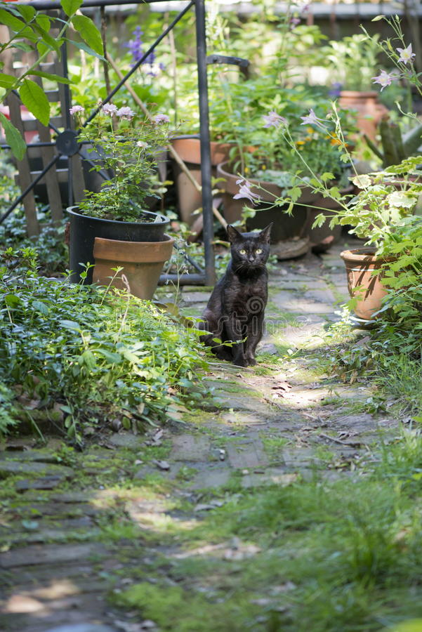 Feral Black Cat in Garden royalty free stock photos