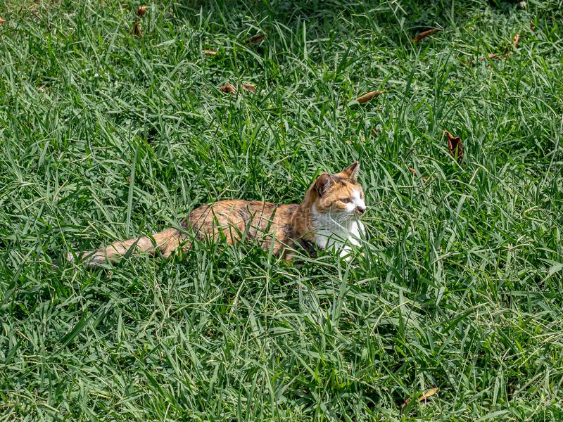 Feral cat in long grass royalty free stock images