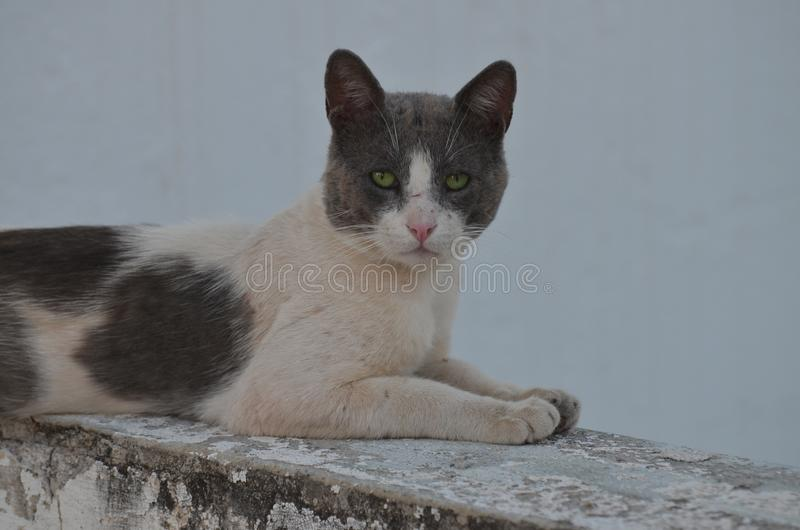 Feral Cat Relaxing In The Shade - Nea Ionia, Athens Greece. A feral but friendly cat sought out the shade on a hot sunny day in Nea Ionia, Athens stock image