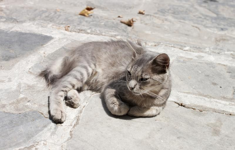 Feral cat standing in the sun. On pavement in a greek island royalty free stock photos