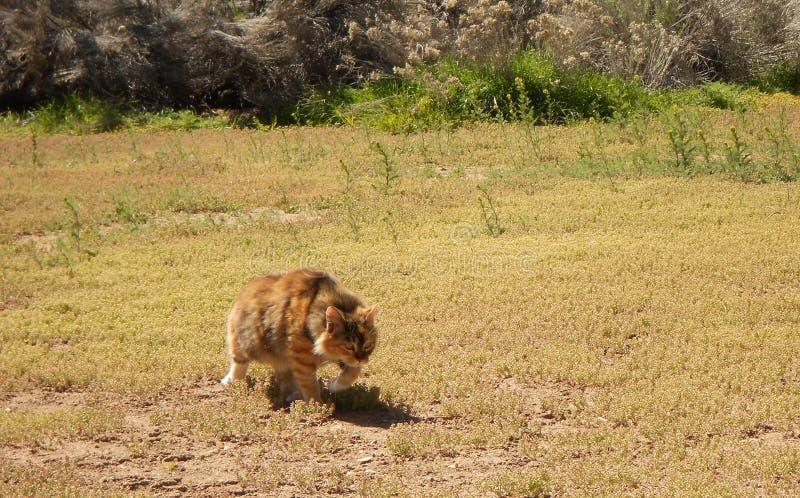 Feral cat strolling through my yard stock photos