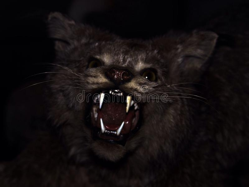 Feral. Dark image of a form of cat baring teeth royalty free stock photography