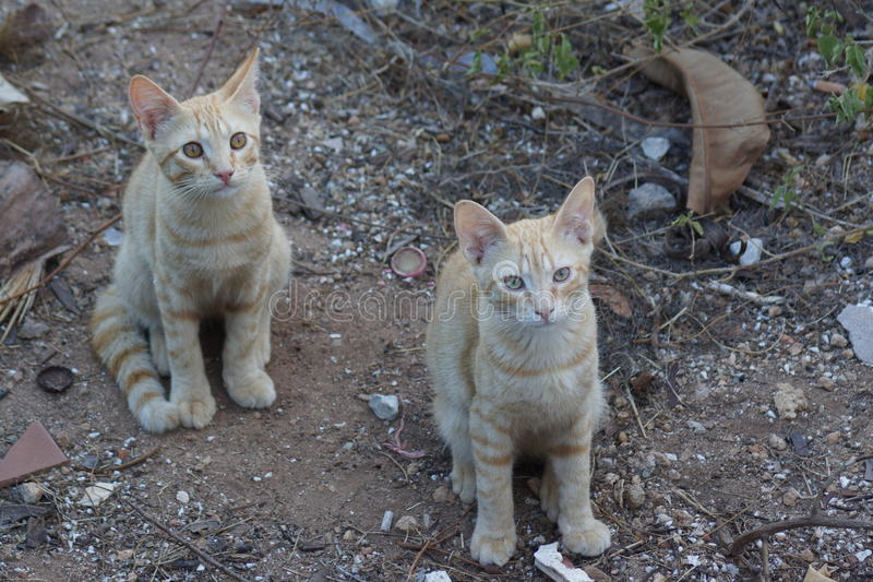 Feral Domestic Cat stock photos