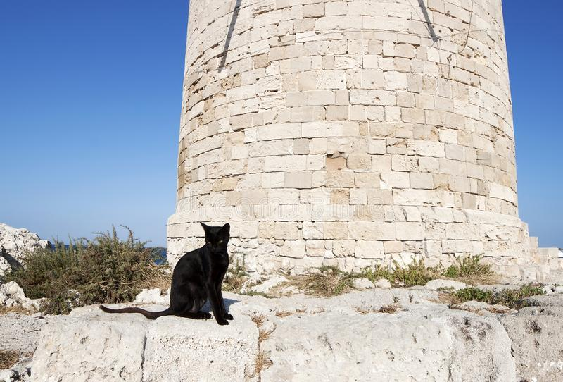 Feral greek black cat royalty free stock image