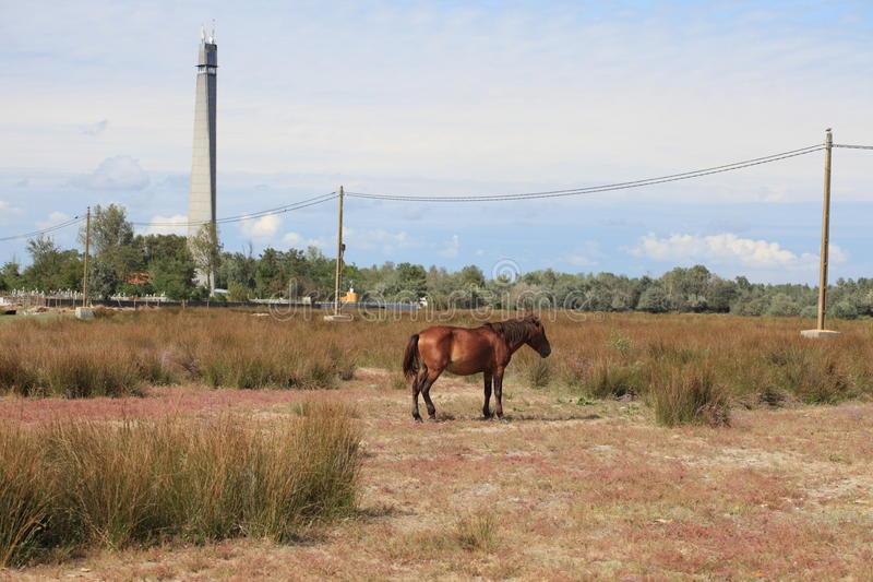 Feral Horse and Lighthouse royalty free stock photography