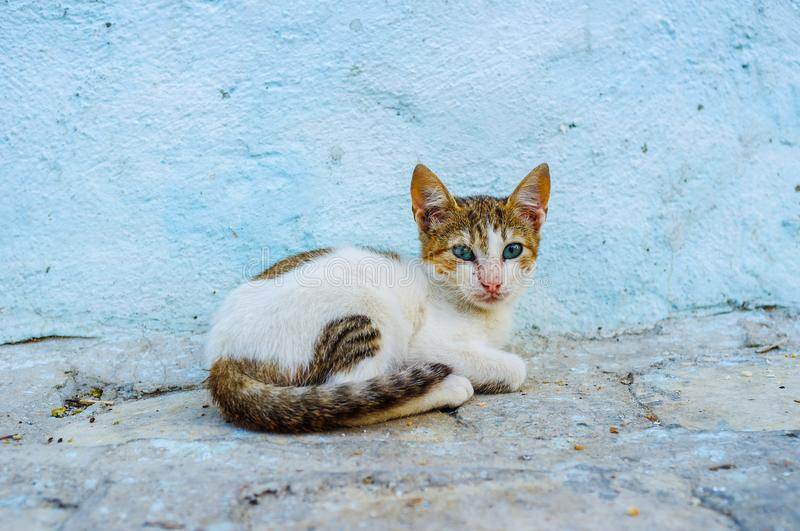 A feral kitten against the house wall, Sousse, Tunisia. A small feral kitten sits against the blue house wall in Sousse Medina, Tunisia royalty free stock image