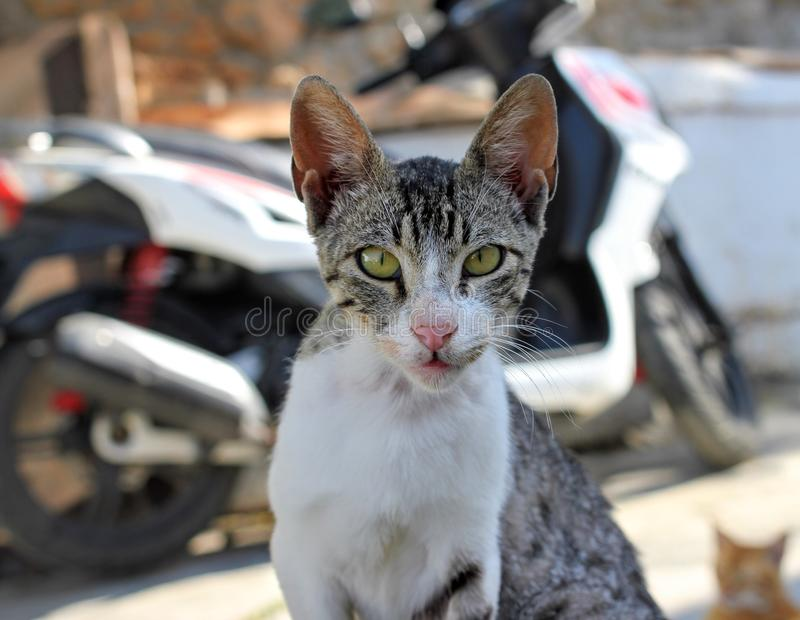Feral Kitten 3. Feral kitten following photographer through narrow streets in Lindos royalty free stock photography