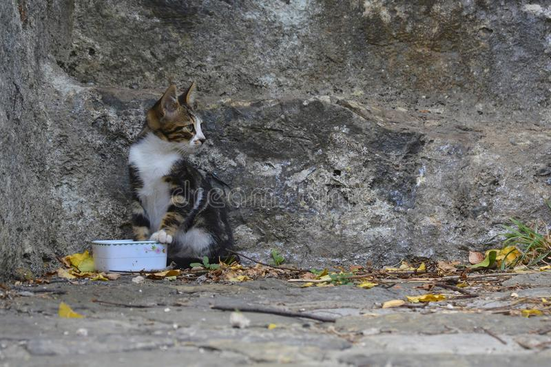 Feral Kitten in Rumeli Hisari. A feral kitten in the grounds of the 15th century Rumeli Hisari fort in the Sariyer district of Istanbul, Turkey royalty free stock photos