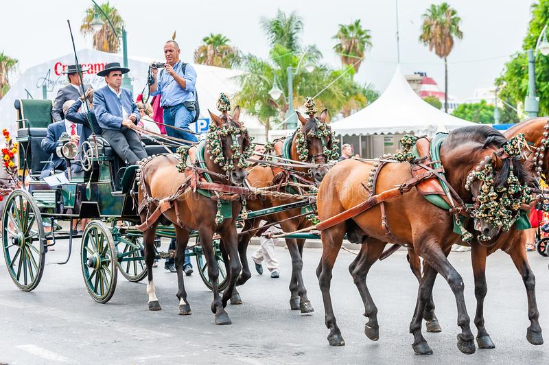 Feria de Malaga. Horse parade on the streets of Malaga. Malaga, Spain - August 11, 2012: Feria de Malaga is an annual event that takes place in mid-August and royalty free stock photos