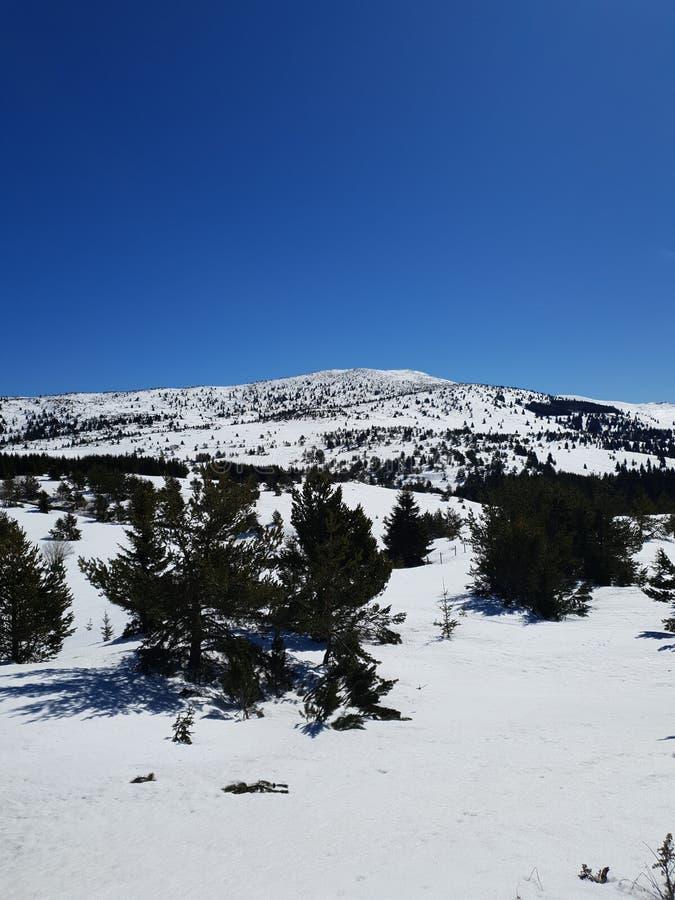 Feriado da floresta da neve do inverno imagem de stock