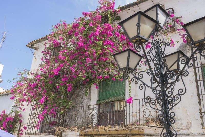 Ferie, arkitektur och gator av vita blommor i Marbella A royaltyfri foto