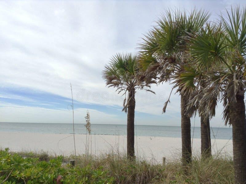 Ferien auf einem Strand mit Palmen stockbilder