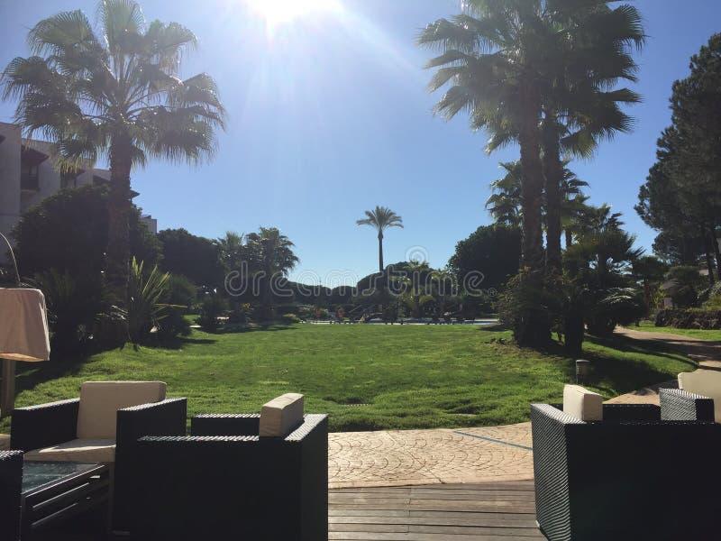 Feriesolnedgång bland palmträden arkivbilder