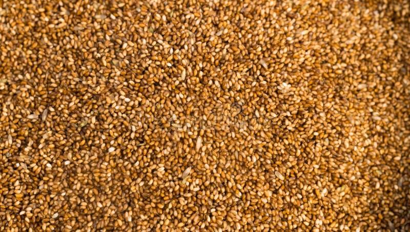 Ferkelwurf-Korn-Weizen-Körner lizenzfreies stockbild