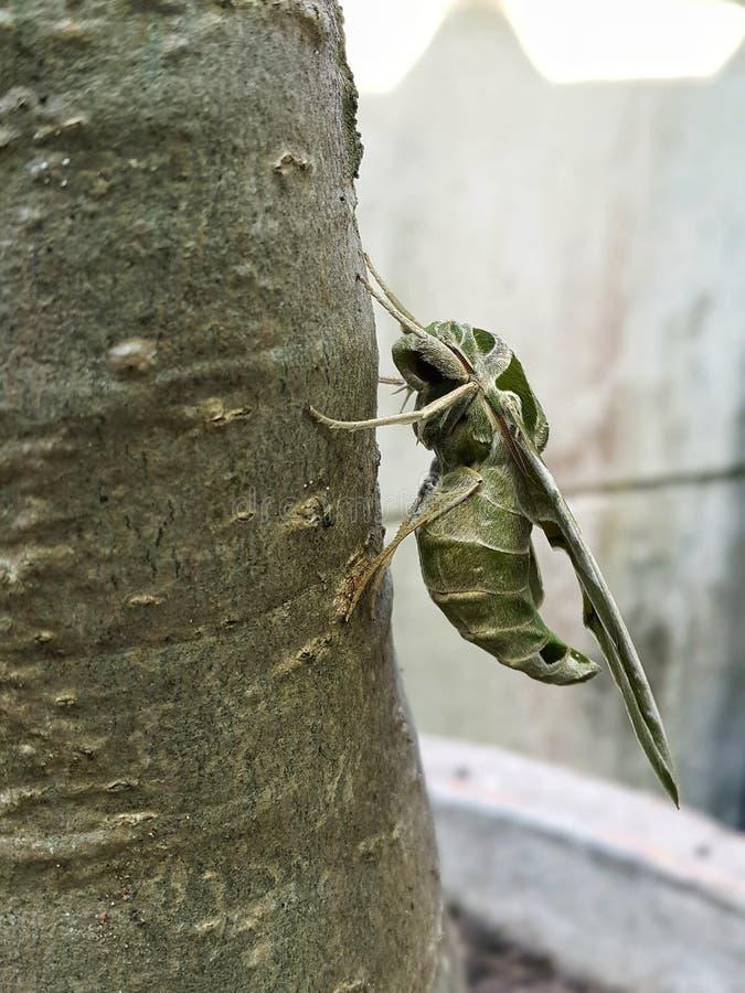 Fermé vers le haut du papillon de nuit images stock