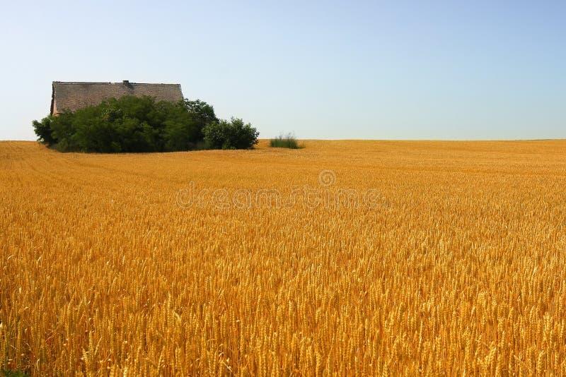 Ferme abandonnée dans le domaine de blé photos stock