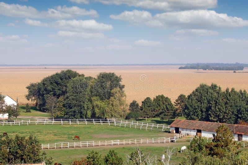 Ferme avec des chevaux dans le corral photo stock