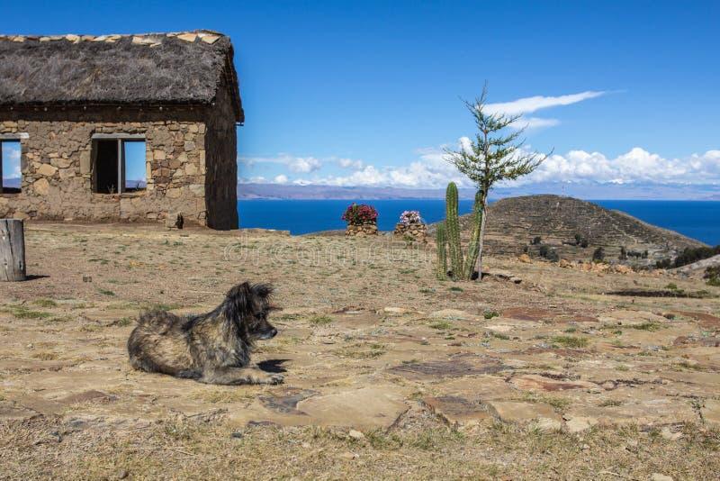 Ferme avec le chien dans l'avant Voyage de route et de bateau à Isla del Sol, photo stock