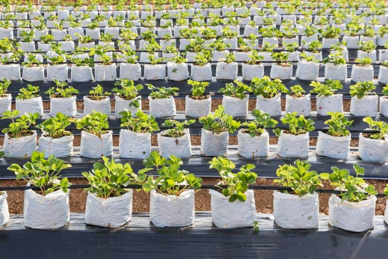 Ferme d'agriculture photo libre de droits