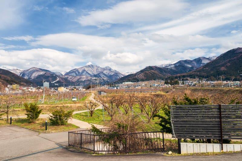 Ferme d'Apple avec les alpes centrales, Yamanouchi photographie stock libre de droits