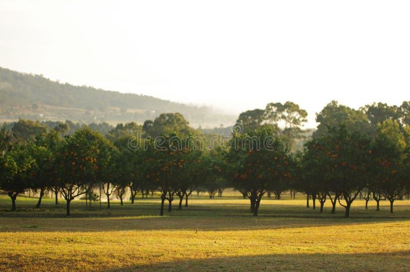 Ferme d'arbre orange photographie stock libre de droits