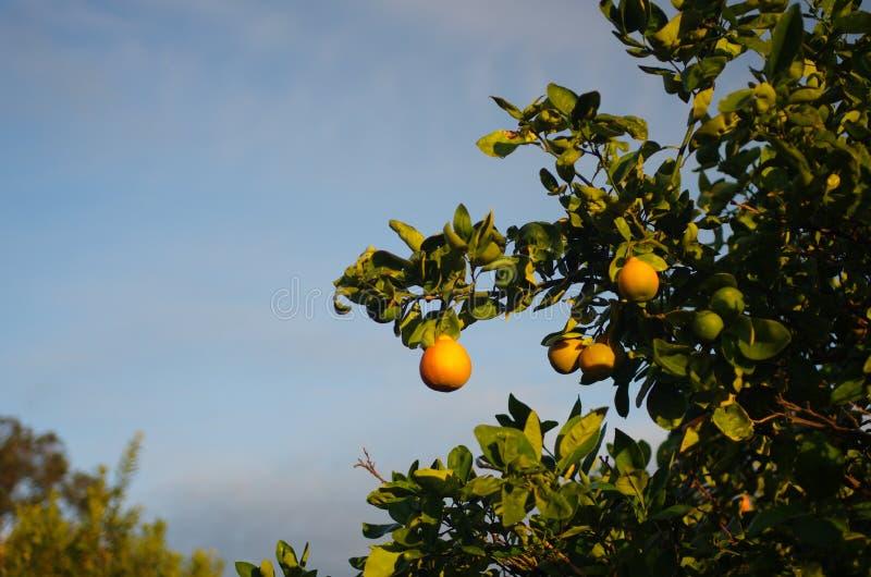 Ferme d'arbre orange images libres de droits