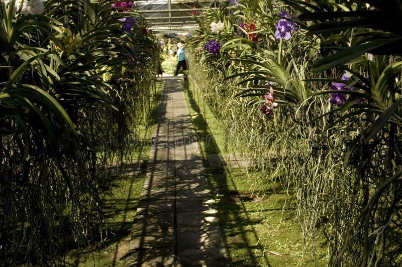 Ferme d'orchidée photographie stock libre de droits