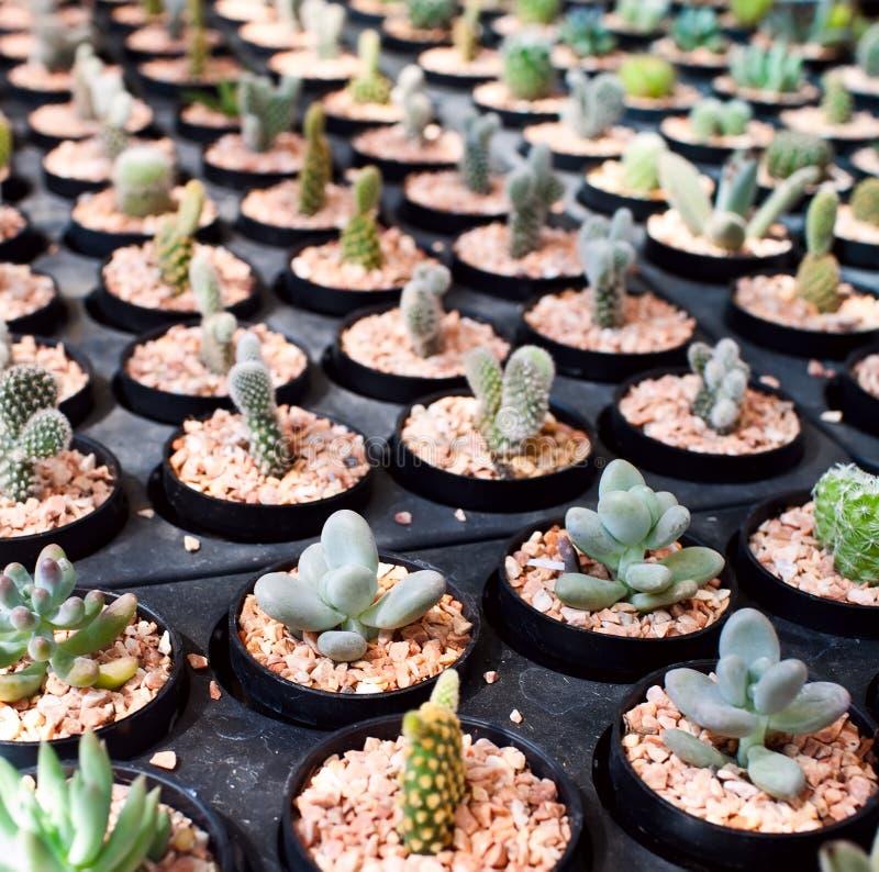 Ferme de cactus images stock