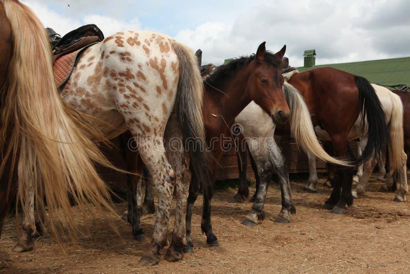 Ferme de cheval près de Moscou, Russie photo libre de droits