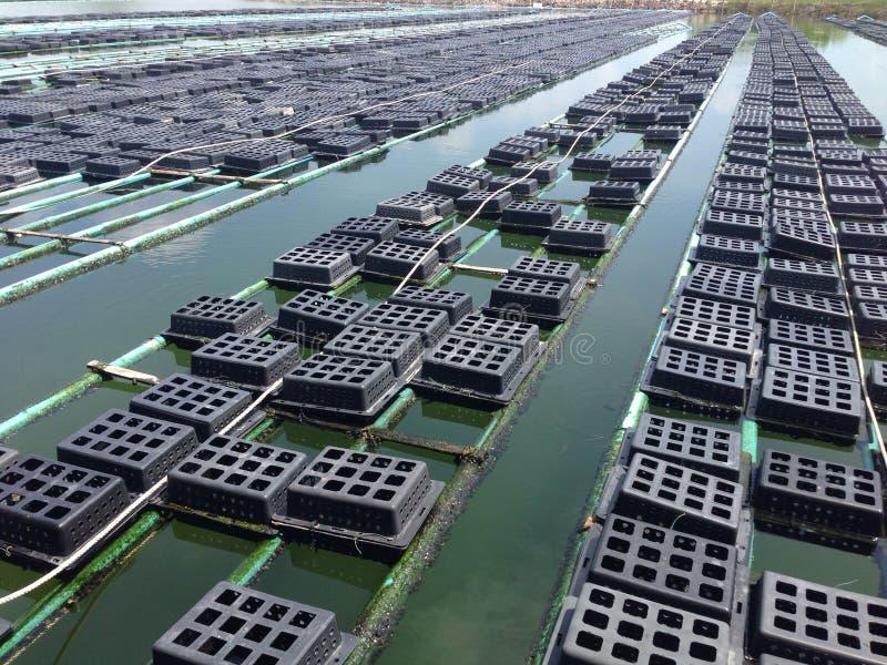 ferme de crabe photo libre de droits