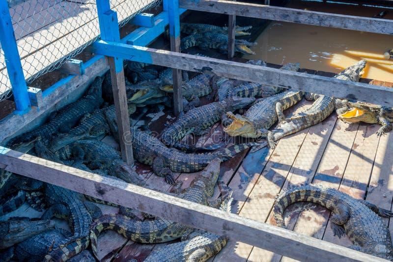 Ferme de crocodile sur un bateau photo stock