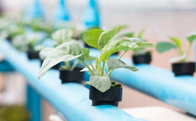 Ferme de culture hydroponique de légumes images stock