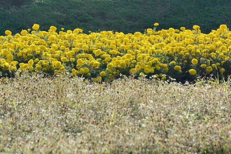 Ferme de fleur photographie stock libre de droits