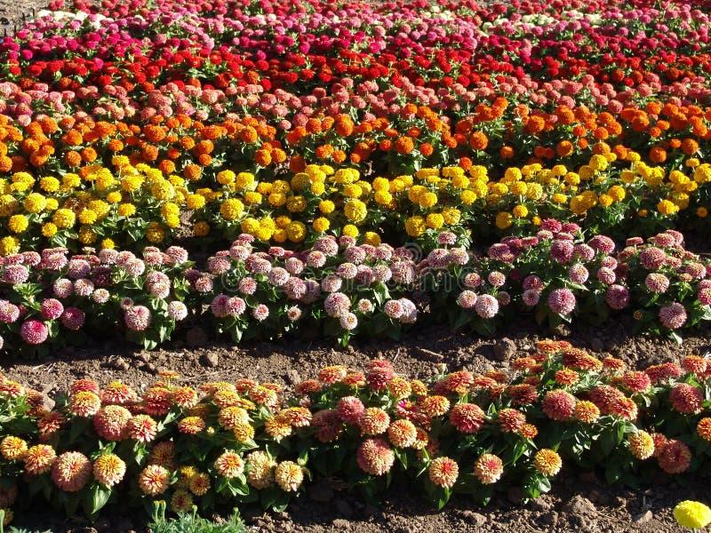 Ferme De Fleur Photos stock