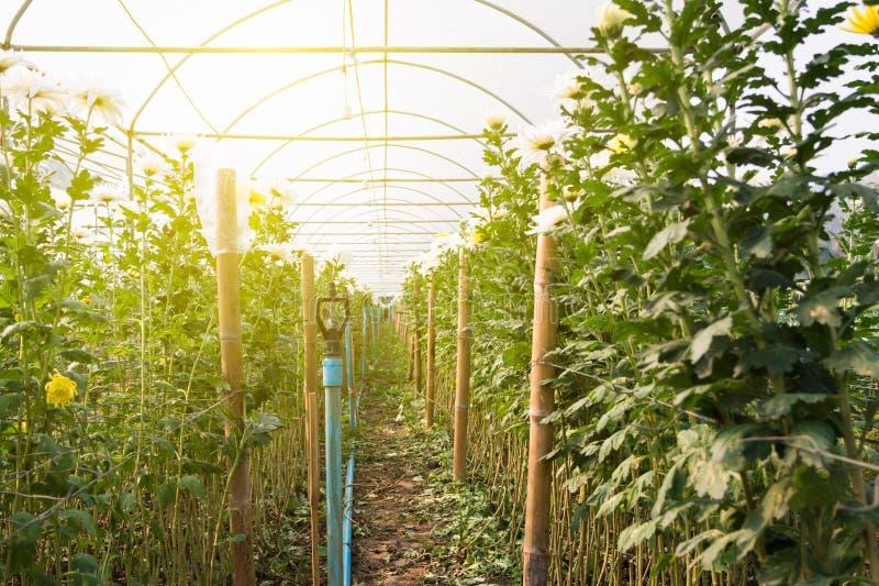 Download Ferme de fleur photo stock. Image du grange, barrière - 87705486