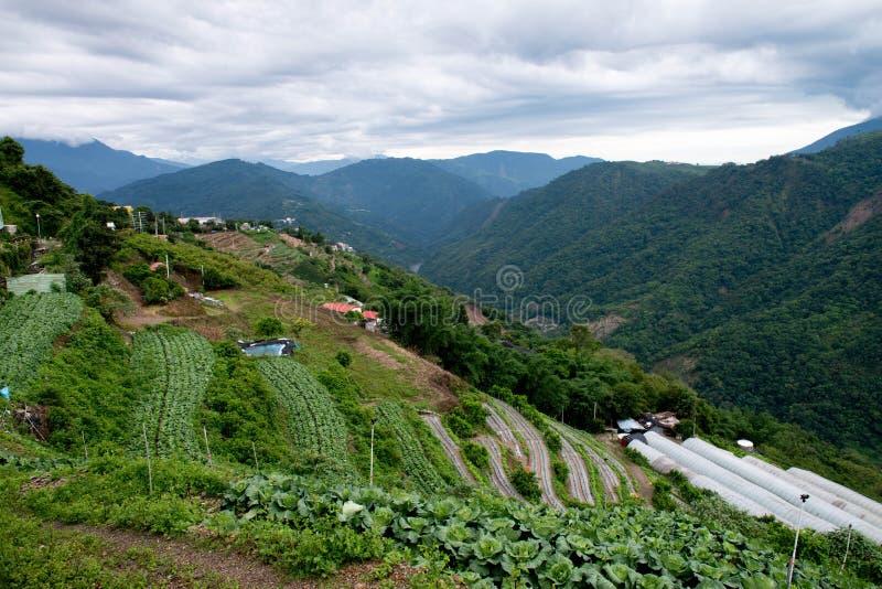 Ferme de légume de teaand de haute montagne photo libre de droits