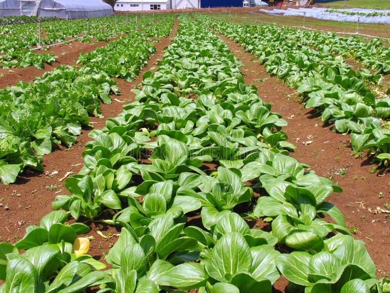 Ferme de légumes photographie stock libre de droits