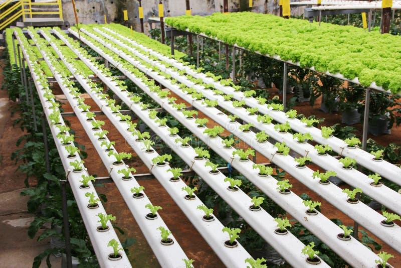 Ferme de légumes image libre de droits