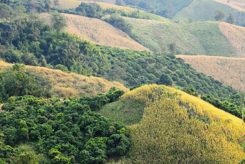 Ferme de maïs sur la montagne image libre de droits