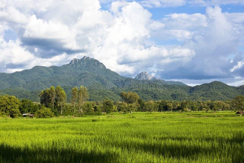 Ferme de riz à l'arrière-plan de montagne image libre de droits