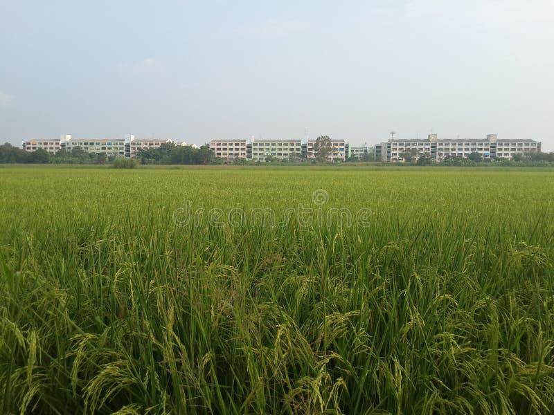 Ferme de riz près du towm image stock