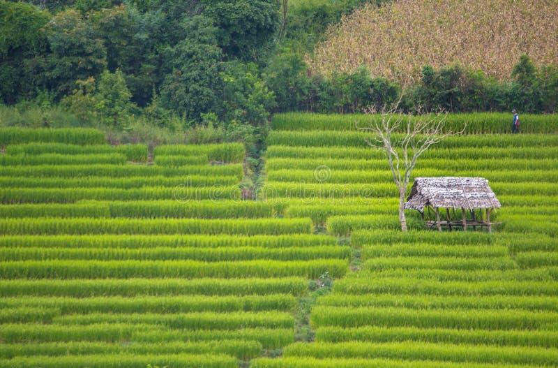 Ferme de riz de terrasse images stock